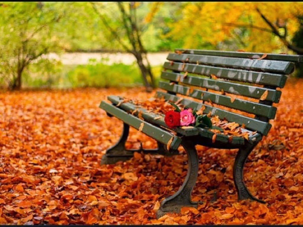 Fall leaves bench